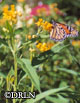 Asclepias tuberosa 'Hello Yellow' -- Butterfly weed – Package of six